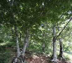 bosco-castagnareto-1